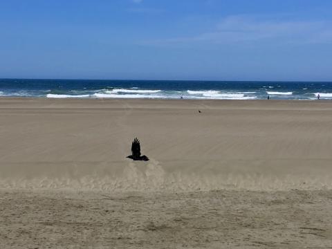 Photo : l'Océan Pacifique à San Francisco