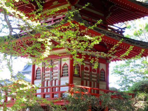 [Photo : Pagode au printemps dans le Japanese Tea Garden]