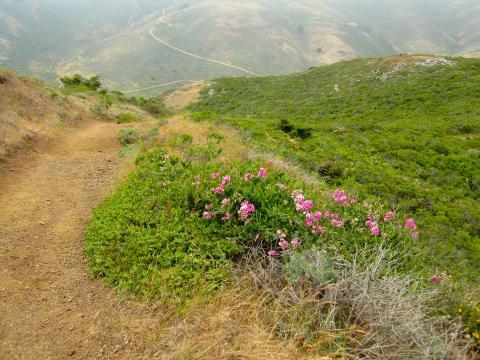 [Photo : chemin de randonnée au milieu des collines]